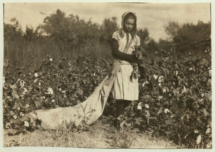 11-year-old girl picking cotton in Oklahoma, 1916