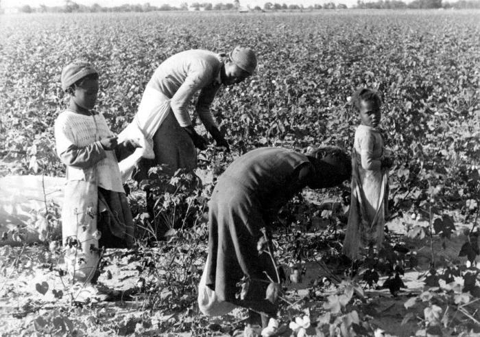 African American women and girls picking cotton, 1937