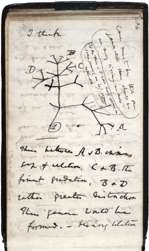 Charles Darwin's 1837  diagram of an evolutionary tree.